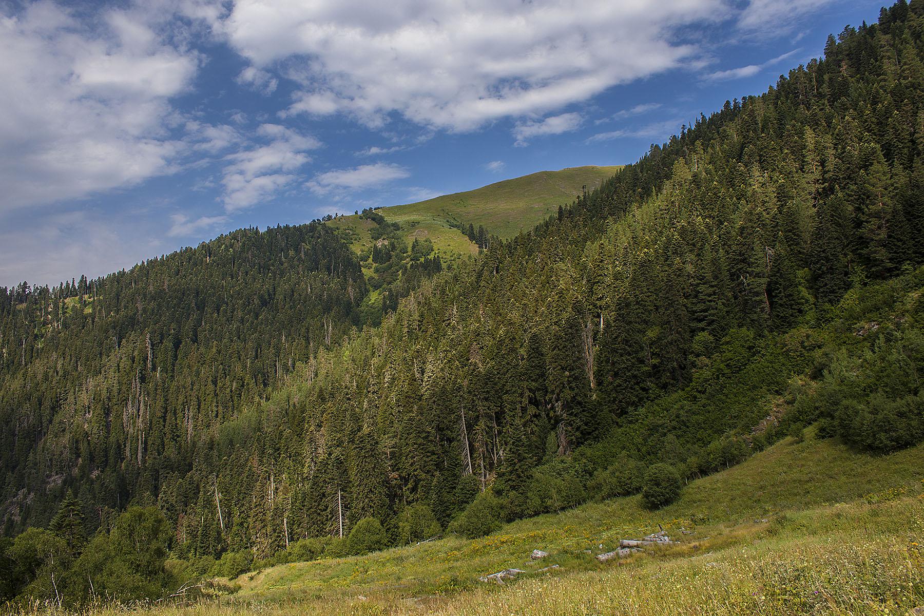 Загедан субальпийские поляны