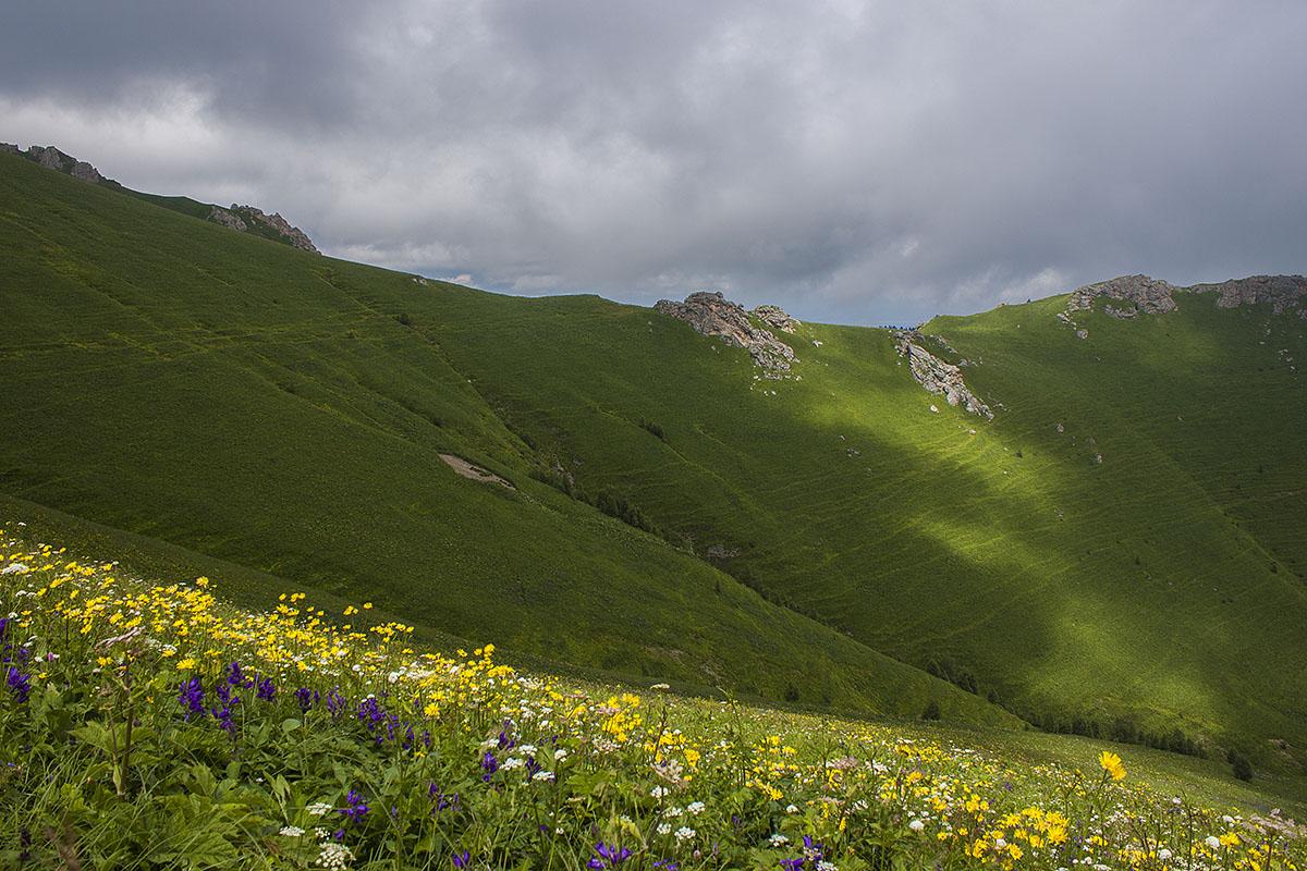 цветущие склоны