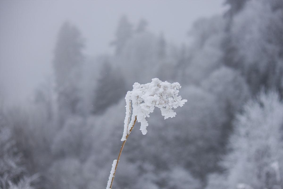 туман мороз поход