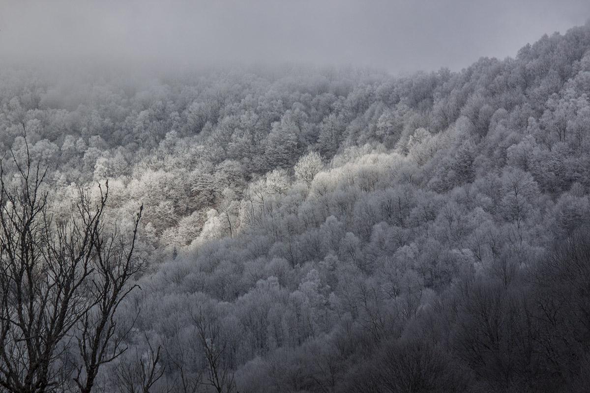 Зимний лес в походе
